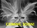 mr_sprinkles_coming_soon.jpg